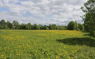 Может ли район передоовать в аренду земельные участки после передачи полномочий городу