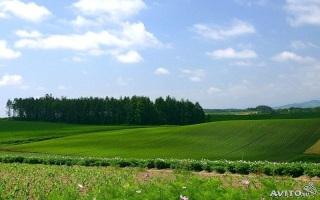 Особенности составление и заключение договора аренды на земельный участок