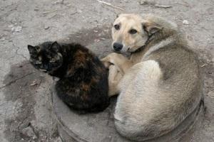 Ужесточение ответственности за издевательство над животными.