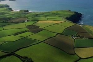 Где арендовать земельный участок для бизнеса