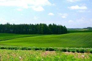 Процедура оспаривания кадастровой стоимости земли